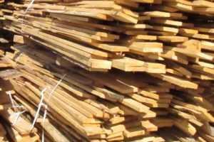 Брянцев будут штрафовать за нарушения в лесу на 10 – 100 тысяч