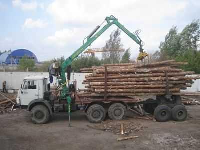 За незаконную заготовку брянского леса накажут чиновников и предприятия