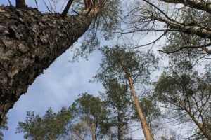 Прокуратура выявила незаконную продажу леса в черте Брянска
