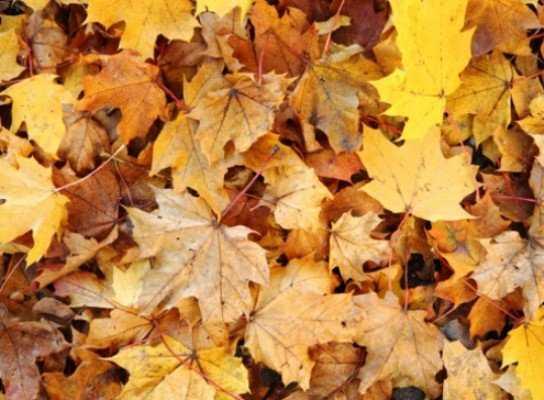 Задушивший женщину листьями брянец предстанет перед судом