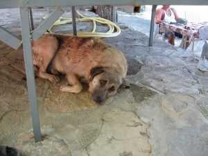 Прокурор велел чиновникам отловить собак, напавших на брянца