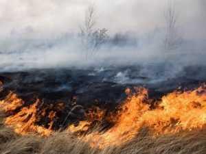 Епархия призвала брянцев не жечь сухую траву