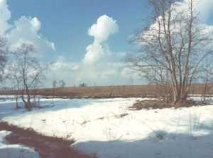 Брянщине пообещали снег с дождём и 11-градусное тепло