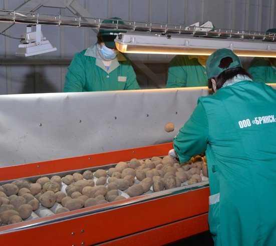 Брянское село получило 132 миллиона на картофелехранилища