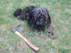 Чиновников накажут за покусавшую 16 брянцев бешеную собаку