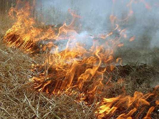 За сжигание сухой травы наказали пятерых брянцев