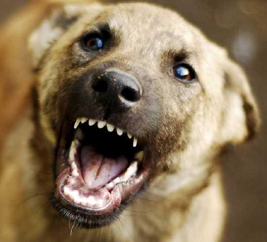 В Брянске прямо на площади Ленина свора собак покусала девушку