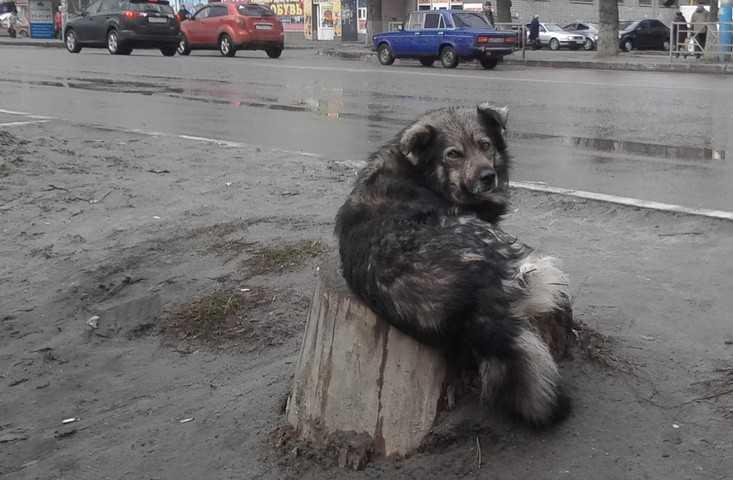 В Брянске на площади Ленина свора собак накинулась на девушку