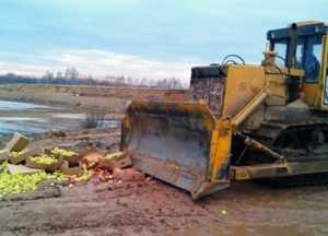 Брянскими тракторами раздавили 25 тонн польских яблок