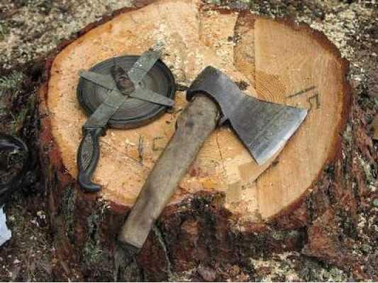 Житель Брянска ответит за вырубку ели и сосен на 230 тысяч