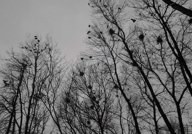 Грачи принесли в Брянск сильный ветер, дожди и похолодание