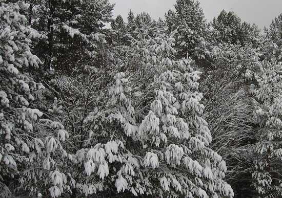 Юг Брянской области завалило снегом