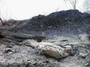 За тягу к огню и костры оштрафовали 124 брянца