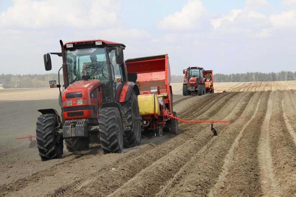 Брянская картофельная фабрика создала сырьевую базу