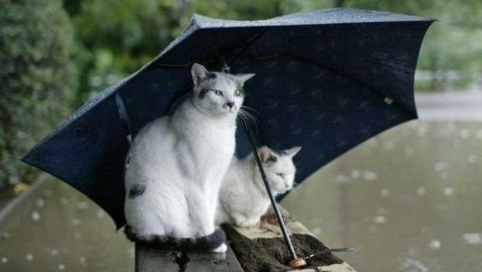 На Брянщину 19-градусное тепло вернётся с дождями и грозами