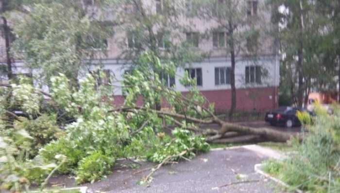 Рухнувшее дерево оставило без света 20 улиц брянского райцентра