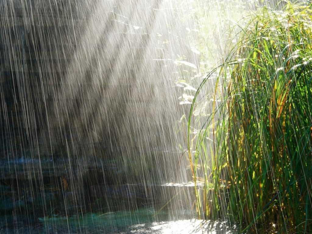 Брянцам завтра пообещали тёплую и дождливую погоду