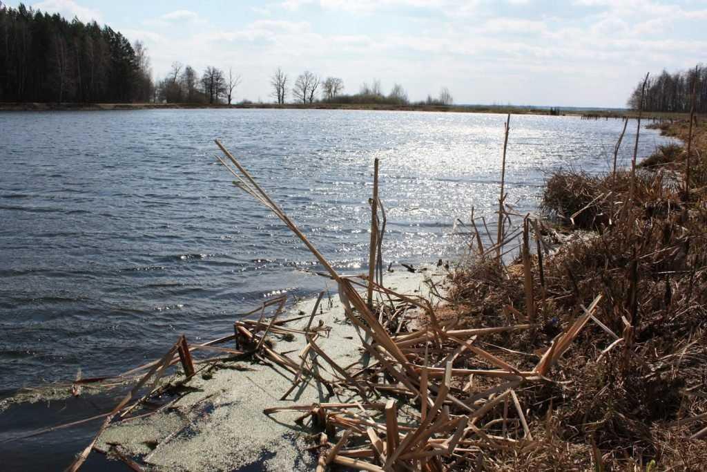 В брянском пруду утонула женщина