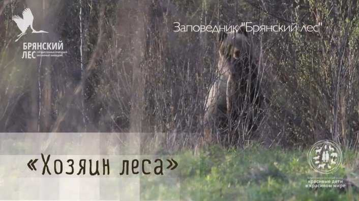 Брянские медведи победили в зрительском голосовании конкурса «Диво России»