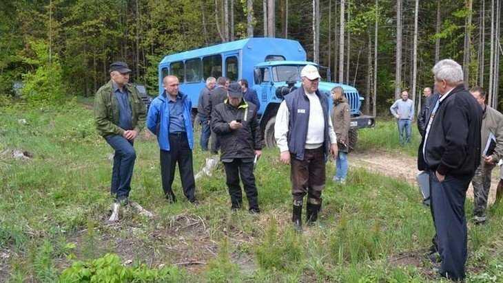 В брянском лесу обнаружено вопиющее варварство
