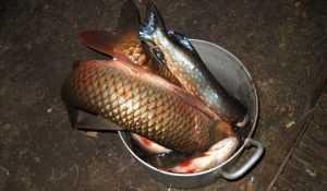На Брянщине оштрафовали около 200 криминальных рыболовов