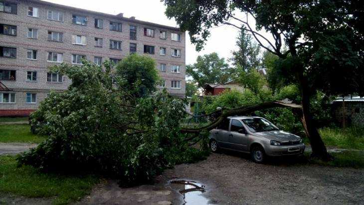 Сломанное ветром дерево придавило легковушку в Брянске