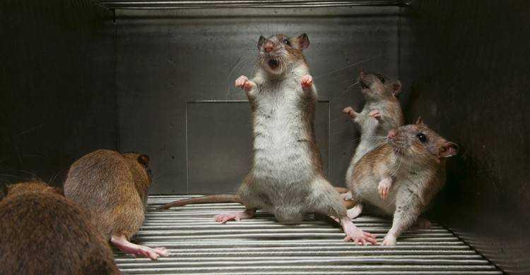 В Брянске покупателей угостили батонами, которые погрызли крысы