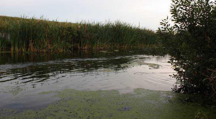 Брянские водолазы подняли утопленника из озера