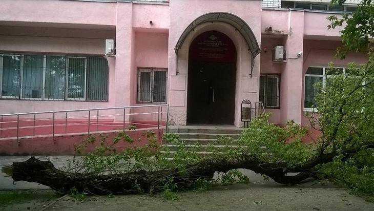 В Брянске ураганный ветер повалил деревья