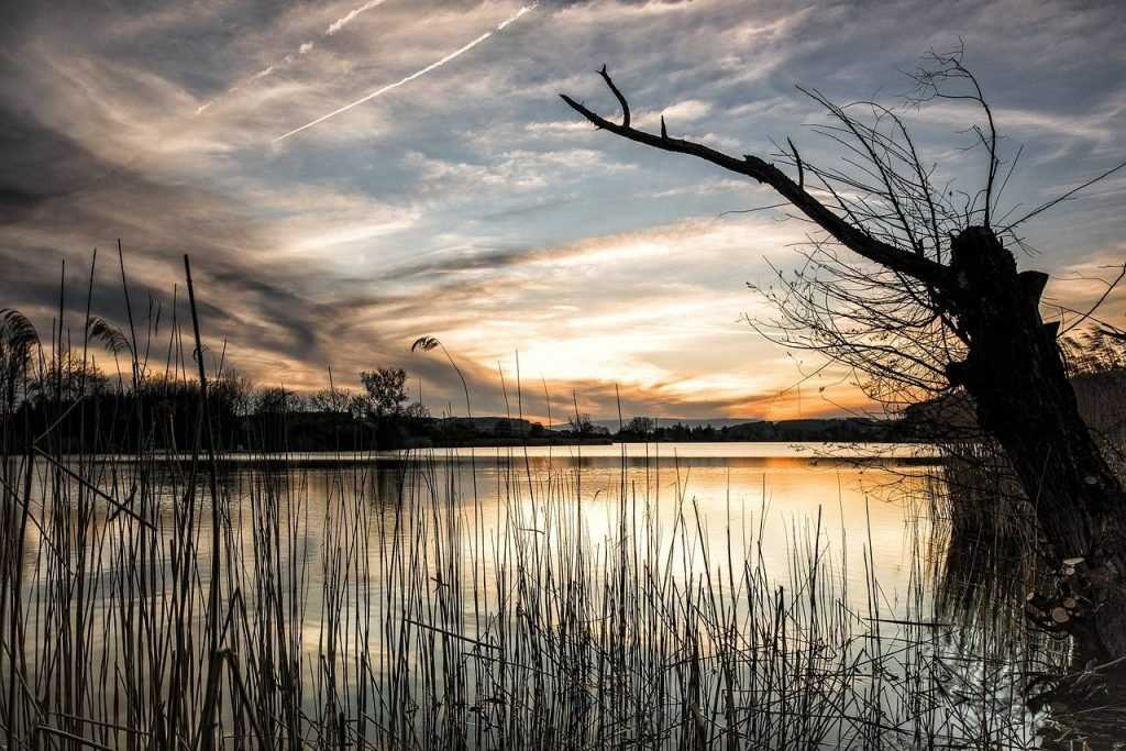 Со дна брянского озера рыбаки подняли утопленника