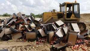 На брянском полигоне уничтожили 21 тонну яблок