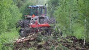 Заросшие деревьями брянские поля мечом воззвали к жизни