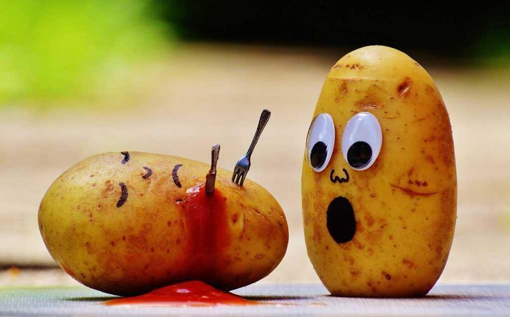 Опасный картофель брянцы вернули белорусам