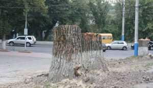 Брянские власти пересчитают и возьмут под защиту деревья