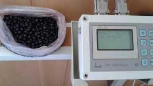 В Брянске выявили радиационную чернику из Белоруссии