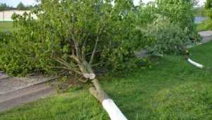 Возбуждено дело об уничтожении 136 деревьев в брянской Путёвке