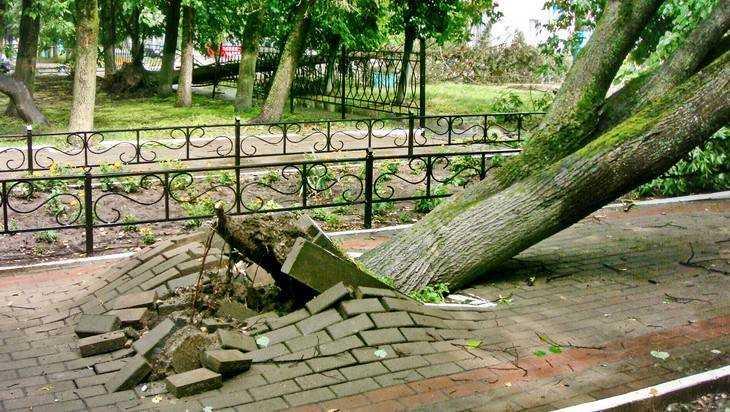 В брянском городе Сельцо ураган вызвал катастрофические разрушения