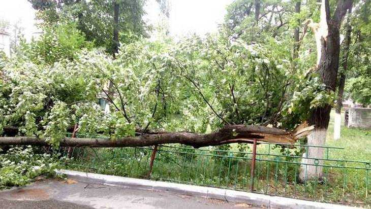 Сильный ветер в Брянске повалил несколько деревьев