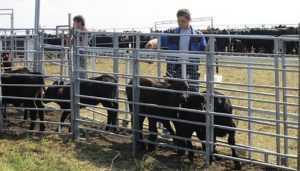 Брянская область получила 1,6 миллиарда на развитие животноводства