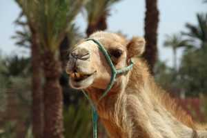 В парке брянцам покажут страусов, верблюдов и обезьяну