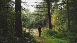В брянском лесу начались поиски заблудившейся пенсионерки