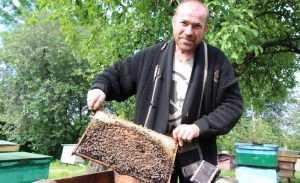 Брянских пчел постигла болезнь цивилизации