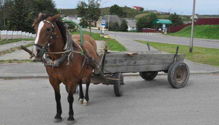 В брянской деревне пенсионерка погибла, упав с повозки