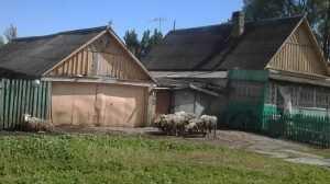 Брянские крестьяне стали разводить коз и овец