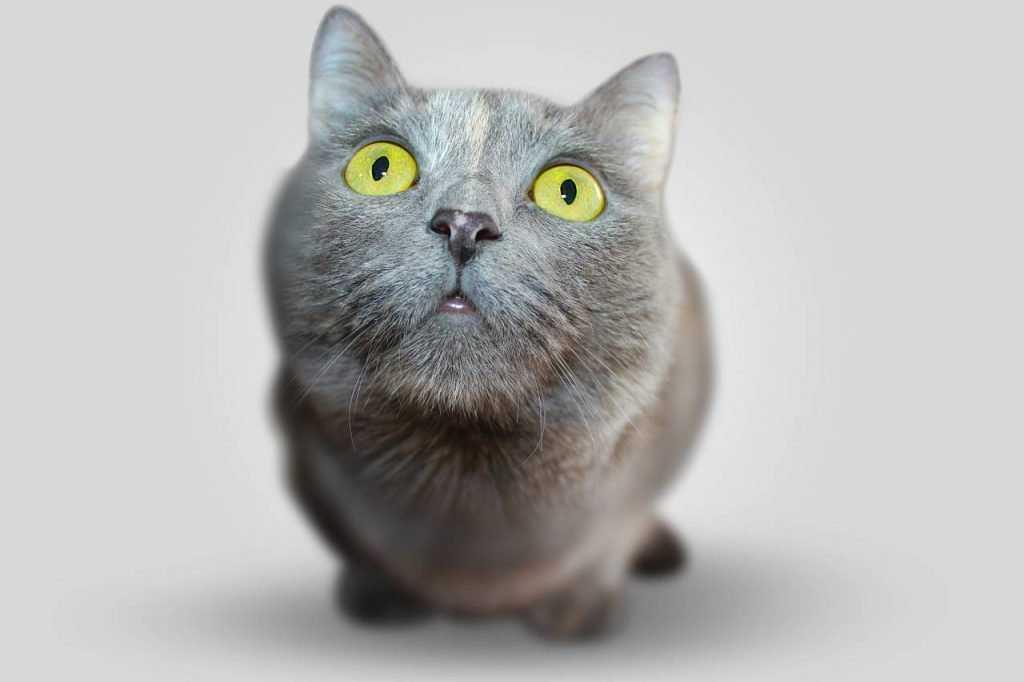 В Брянске бешеная кошка покусала хозяев