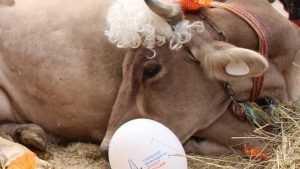 Молоко брянского производителя забраковали