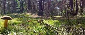 Заблудившуюся в лесу брянскую пенсионерку нашли