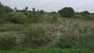В Брянском районе заброшенное озеро превратили в лужу