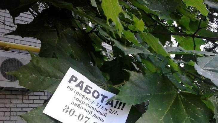 В Брянске появилась реклама на кленовых листочках