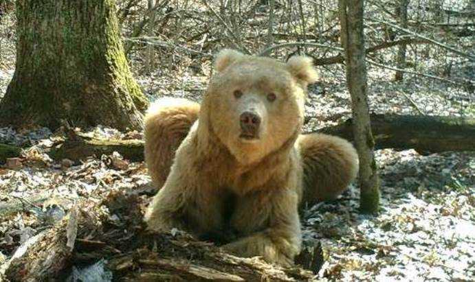 Животные брянского леса украсят трансформаторные подстанции